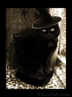 Black cats look cute in witches hats, but a lot of people are afraid to adopt them because of silly superstitions. Black cats are wonderful pets!