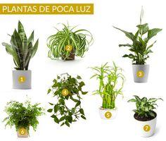 Plantas de interior que requieren poca luz