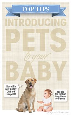 Top Tips for Introducing Pets to Your Baby — because I most likely WILL have a dog well before I have kids lol