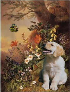 Image detail for -The Story Behind the Song: Dog and Butterfly