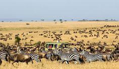 African Safari #jetsettercurator