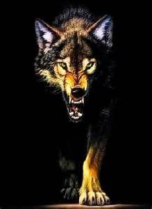 Growling wolf by DestructiveDingo on DeviantArt