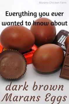 Cute Chickens, Raising Chickens, Chickens Backyard, Fresh Chicken, Chicken Eggs, Maran Chickens, Egg Facts, Chocolate Color, Chocolate Brown