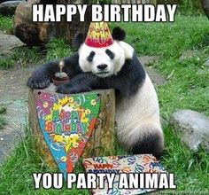 happy birthday you party animal - Happy Birthday Panda Happy Birthday Dana, Funny Happy Birthday Meme, Happy Birthday Brother, Happy Birthday Images, Birthday Pictures, Happy Birthday Wishes, Birthday Quotes, Humor Birthday, Happy Birthdays
