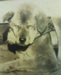 The real Hachiko..