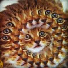 Too much catnip