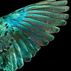 An Iridescent wing from the book Feathers, by photographer Robert Clark  See his work @robertclarkphoto  #bird #avian #robertclarke #feathers #book #iridescent #glamorous #book #artist #art #collection #wing #flight #nature #natural #biology #biological #wildlife #free #bornfree #wild #soar #sky Eco #ecology #air #robertclarkephotography #photographer
