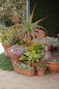 planted succulent arrangements
