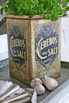 Windowsill herbs growing in vintage tins <3