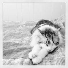 Thor, the thunder cat.