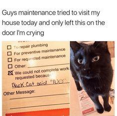Funny Animal Memes, Funny Animal Pictures, Cute Funny Animals, Funny Cute, Cute Cats, Funny Memes, Cute Cat Memes, Funny Humour, Meme Pictures