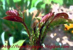 Τα φαγητά της γιαγιάς - Μελίγκρα (Αφίδες) - καταπολέμηση με φυσικό τρόπο Garden Works, Garden Guide, Garden Pests, Outdoor Gardens, House Design, Nature, Flowers, Plants, Gardening