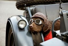 WASPing Through the Countryside - have always dreamed of having a sidecar motorcycle with a dog I could travel with