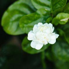 Συμβουλές φροντίδας για το φούλι Ikebana Arrangements, Home And Garden, Rose, Flowers, Plants, Gardening, Tape, Lawn And Garden, Pink
