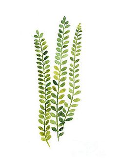 Green Fern Watercolor Minimalist Painting Art Print by Joanna Szmerdt - Acuarela - Minimalismus İdeen Watercolor Plants, Watercolor Leaves, Watercolor Paintings, Green Watercolor, Green Paintings, Flower Watercolor, Minimalist Painting, Minimalist Art, Mural Floral