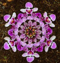 """artist danmala. mandala art from flowers    8""""x8"""" - 14""""x14"""" for @Dottie Brown"""