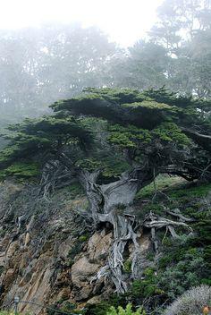 Point Lobos by waffleslayer