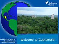 Virtual Rainforest visits