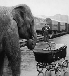 Elephant walks baby