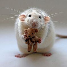 I looove this little mouse!!!!!!!    ensphere:    Me and my bear.