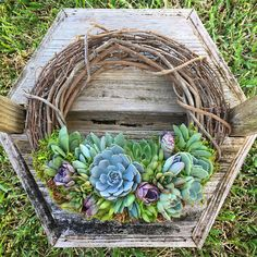 ** Wreaths pictured have been SOLD, this is a listing for a made-to-order wreath. *** A 12 living succulent wreath adorned with a variety of succulents including Agave, Haworthia, Echeveria, Sedum and many others. The wreath measures 12 inches wide. Make sure the wreath receives