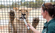 Special treatment: VIP experiences - SALIFE Best Steak Restaurants, Australian Restaurant, Meat Lovers, Tasting Room, Day Trips, Vip