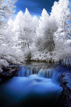 New zealand frosted trees around small falls landscape photography, cool photos, waterfall, landscape Cool Pictures, Cool Photos, Beautiful Pictures, Amazing Photos, All Nature, Amazing Nature, Amazing Art, Beautiful World, Beautiful Places