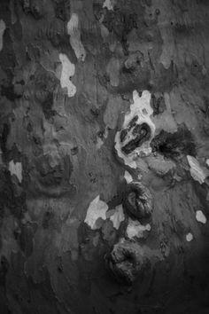 """""""Dendroderm #4"""" by Pierre-Paul De Beir #art #artphotography #photography #tictacartcollection #dendroderm #bark #pierrepauldebeir"""