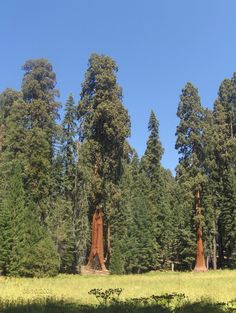 Sequoia National Forest, CA...tallest trees in the world | Places ...
