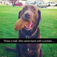 Another pooch came back with a  potato, instead of the ball that the owner had thrown