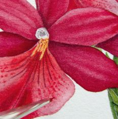 How to paint watercolour botanicals (Part three)