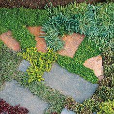 Ground cover variety!