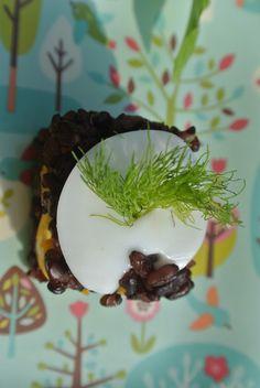 Birthday Dog recipe : Venere rice, egg yolk and fennel