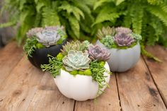 Sophisticated pumpkins in black, white or grey – overflowing with gorgeous pastel succulents! We've paired them with bright green reindeer moss and hanging string of beans. This combination of a harvest favourite along with homegrown succulents, makes a perfect Autumn gift or home accent. The best part is that you don't have to carve the pumpkin yourself, and you can use it again year after year! Shop in-store (Surrey BC) or online www.westcoastgardens.ca #succulent #succulents #pumpkins