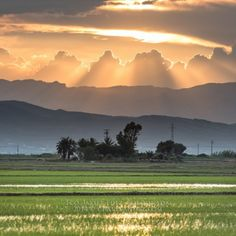 Delta del Ebro - Taller de Fotografía de paisaje