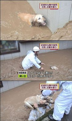 """[Upper right side telop] Local heavy rainfall in Hokuriku and Kansai region. Rescue; """"Hanako! This way."""" Dog owner; """"Not Hanako. Cherry, Cherry is."""" Hanako is one of typical and traditional girl's name. I don't understand why rescue thought it name is Hanako."""