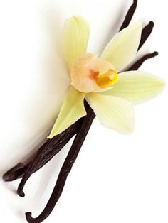 Vanilla.  An ingredient in the Mommy's Club Product Line.    Visit Our Website For More Product Information:  www.ToxicFreeForMyFamily.com