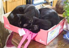 #blackcatsrule
