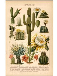 Cactus Desert Plants 8 x 10 JPG Digital by InstaDesignPrints Illustration Art Nouveau, Illustration Botanique, Plant Illustration, Botanical Illustration, Vintage Botanical Prints, Botanical Drawings, Botanical Art, Cactus Planta, Cactus Y Suculentas