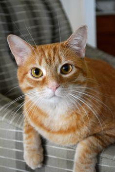 My Murphy Cat <3