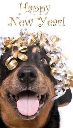 happy new year dog happy new year everyone happy new