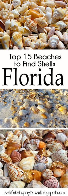 Sea shells can be found on a lot of Florida Beaches. These are the ones that they are consistently found on. Sanibel island - best beaches - Florida