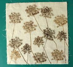 inleaf: queen anne's lace