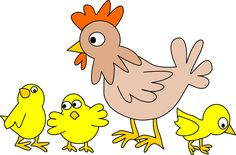 Fjerkræ, Kylling, Dyr, Fugl, Gård, Høne, Husdyr