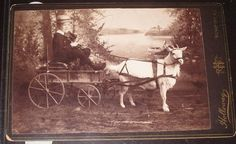vintage goat cart photos | Little boy in goat cart Antique cabinet photo from victorian age ...
