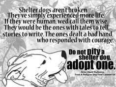Check out your local shelter.