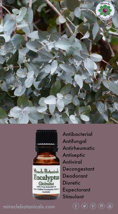 Eucalyptus can be used for: Uses: Analgesic, Antibacterial, Antifungal, Antineuralgic, Antirheumatic, Antiseptic, Antispasmodic, Antiviral, Decongestant, Deodorant, Depurative, Diuretic, Expectorant, Febrifuge, Stimulant, Vermifuge, Vulnerary.  #conscious