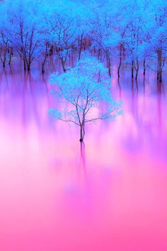 Nature keeping up with trending color pallets. Absolutely love the blue and pink! Beautiful Nature Wallpaper, Beautiful Landscapes, Nature Pictures, Cool Pictures, Beautiful World, Beautiful Places, Trees Beautiful, Simply Beautiful, Pink Nature
