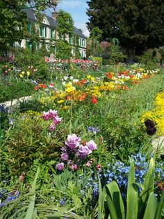 Spring in Monet's Garden - Giverny; one of the most beautiful places I've ever been!