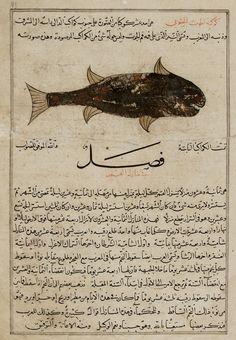 Arts of the Islamic World | Folio from a <i>Aja'ib al-makhluqat</i> (Wonders of Creation) by al-Qazvini | F1954.49
